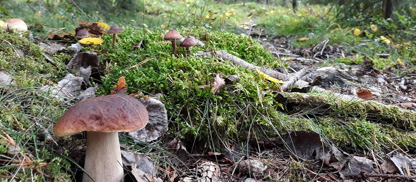 Svampar i Malma naturreservat.
