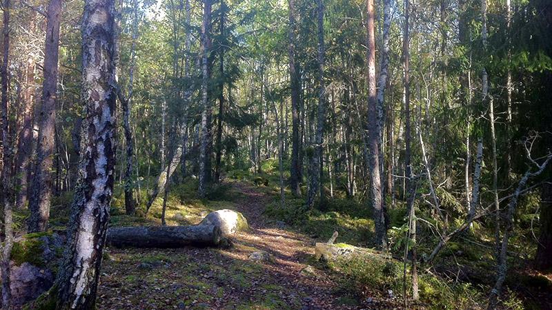 Stig Malmköpings naturreservat
